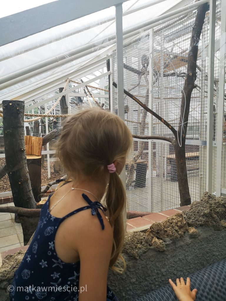 lemury-palmiarnia-wałbrzych