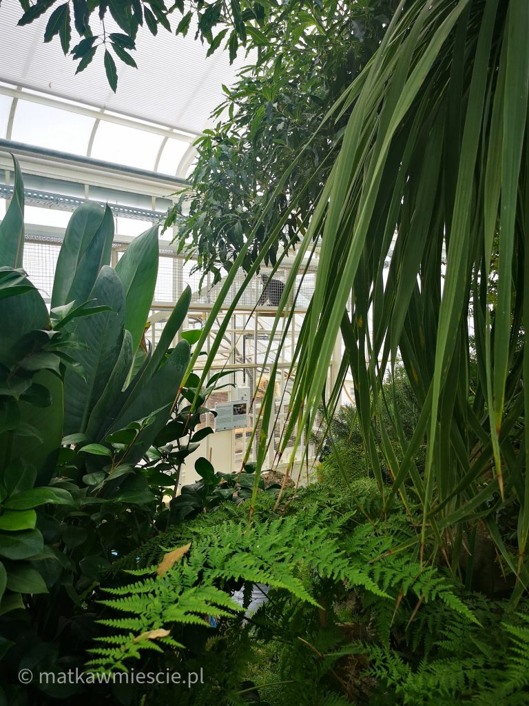 lemur- rośliny