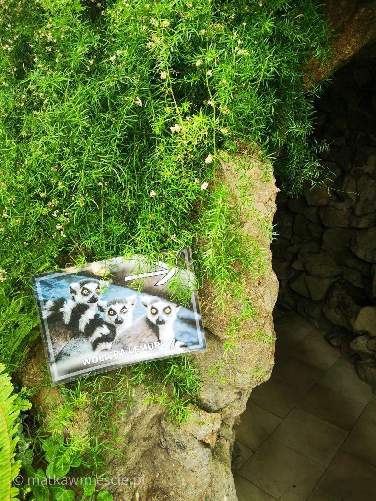 woliera-lemurów-wałbrzych