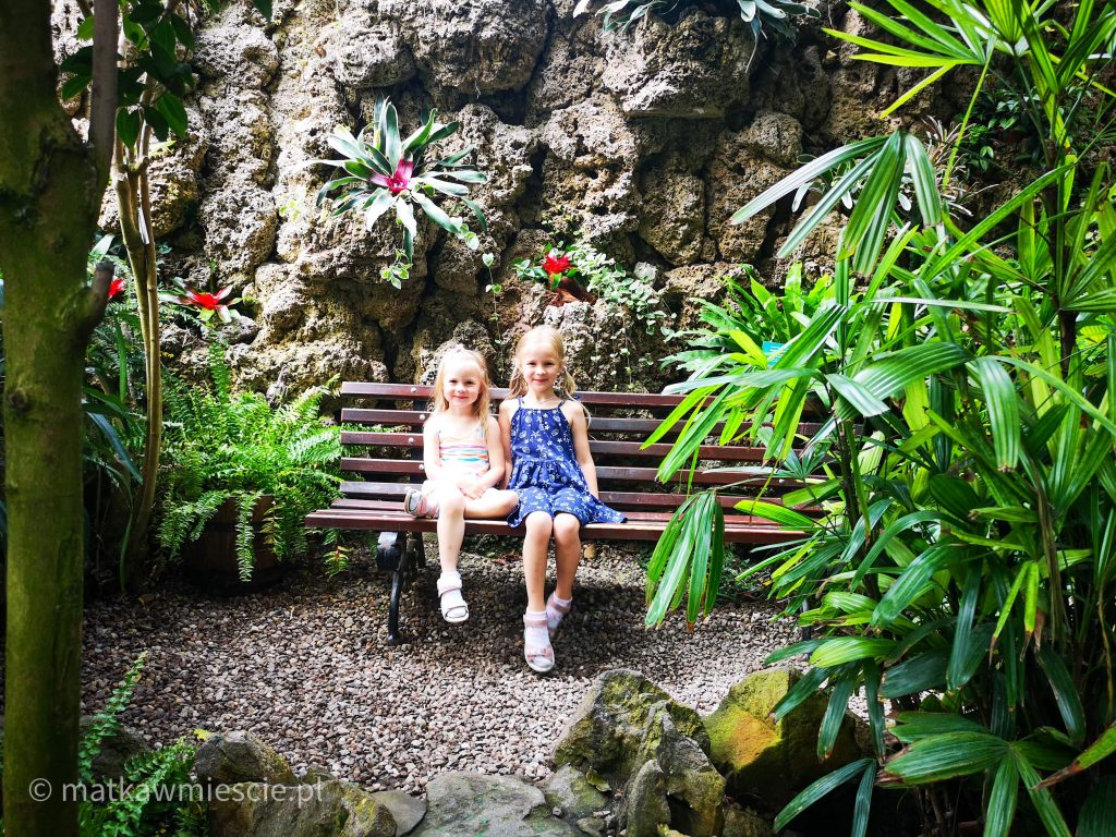dzieci-palmiarnia