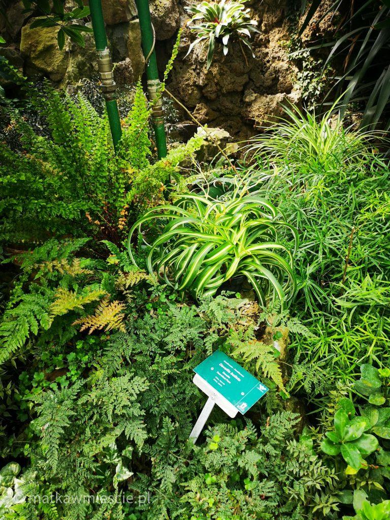 roślinność-palmiarnia