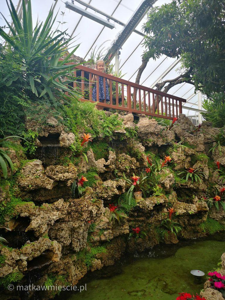 skały-z-etny-palmiarnia