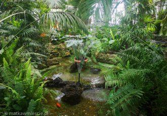 fontanna-palmiarnia-wałbrzych