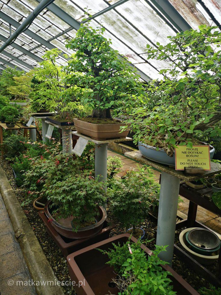 wystawa-bonsai