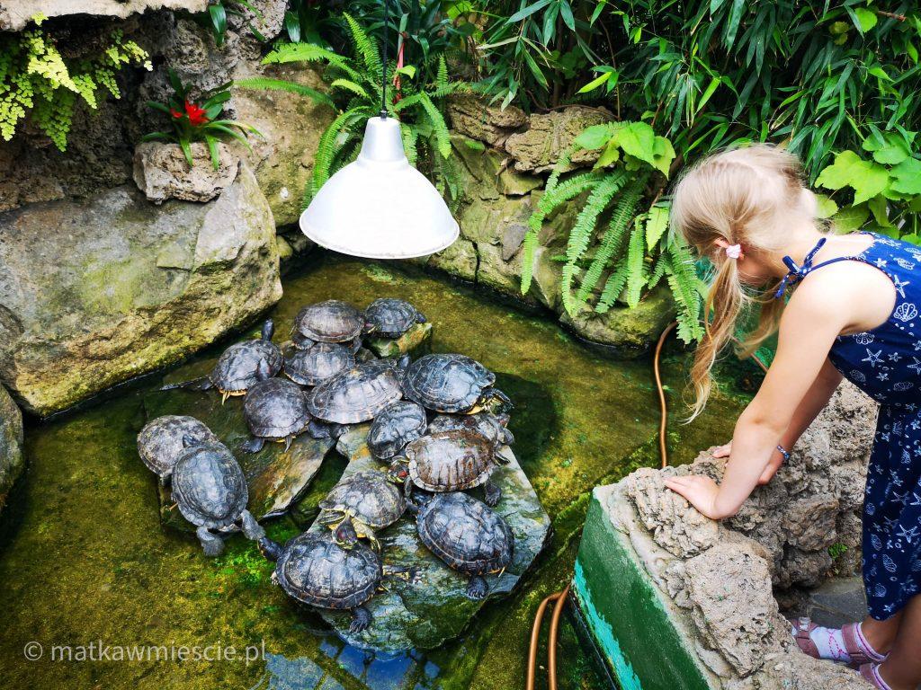 żółwie-palmiarnia