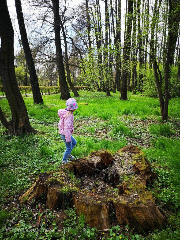 pień-drzewa-park-wschodni